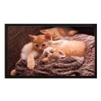 Fußmatte Image cats