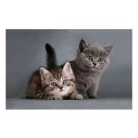 Fußmatte Gallery Kitten