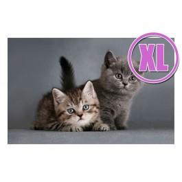 Fußmatte Gallery Kitten XL